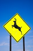 Yellow road sign deer crossing USA on blue sky poster