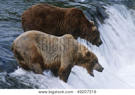 USA Alaska Katmai National Park two Brown Bears standing in river above waterfall