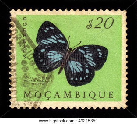 Butterfly Forest Queen (euxanthe Wakefieldi)