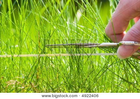 Mow The Lawn With Scissors