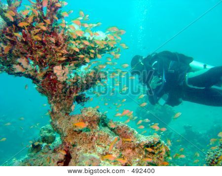 Diver With Corals