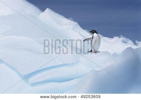 Ad_lie Penguin (Pygoscelis adeliae) on glacier