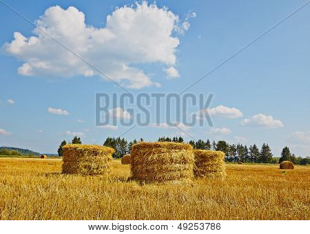 Harvest Field With Straw Vertical Rolls In Summer. Blue Sky. Green Forest
