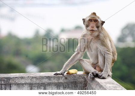 Lonely monkey.