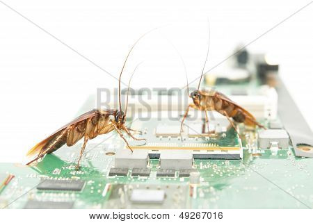 Cockroaches climbing on circuit board