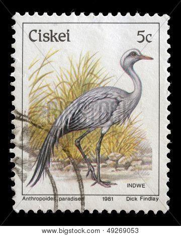 CISKEI - CIRCA 1981: A stamp series printed in Ciskei shows Blue Crane (Anthropoides paradiseus), circa 1981