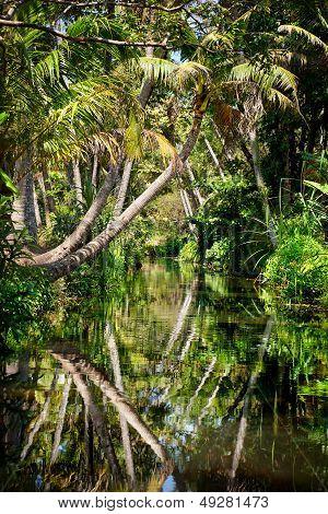 Backwater In Jungle