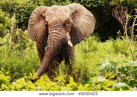 Happy elephant in the sunlit jungle