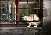 Street Cat on the windowsill in old building poster