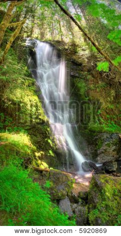 Merriman Falls in the Quinault temperate rainforest area of Olympic National Park poster