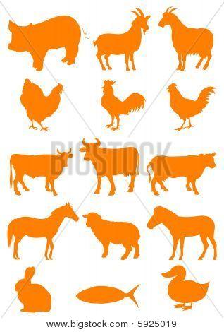 Set of farm animal