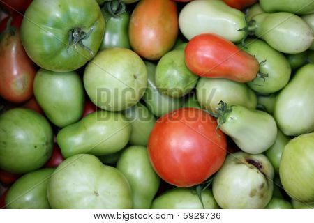 Red And Green Tomatoes