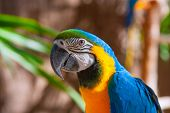 Blue Parrot portrait with yellow neck in the park poster