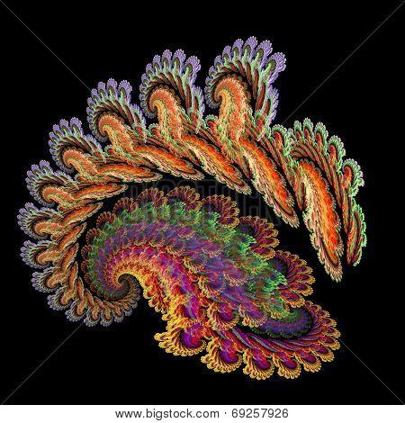 Peacock Snail Spiral
