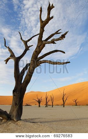 Dead Vlei, Sossusvlei, Namibia, southern Africa