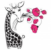 Cute black and white giraffe cartoon character with bunch of pink flowers poster