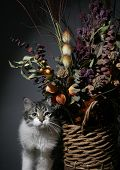 Cat with flora in still life poster