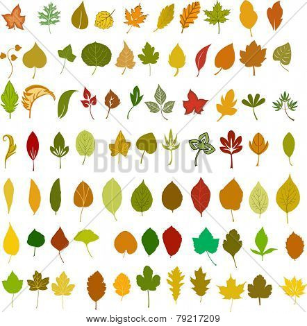 Vector leafs illustration