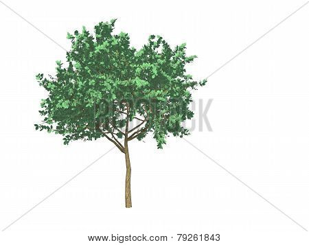 3d tree on white