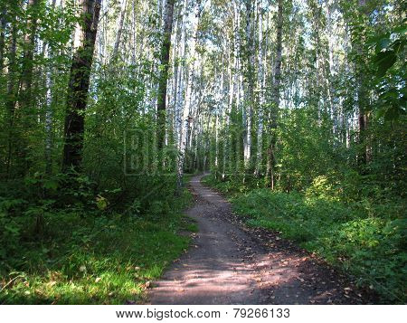 Forest And Path