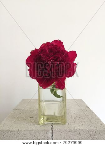 Red Peony In A Vase