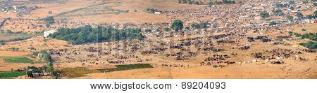 Thousands Of Camels And Other Livestock At Pushkar Camel Fair In India