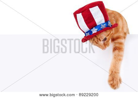 Patriotic Cat Sign