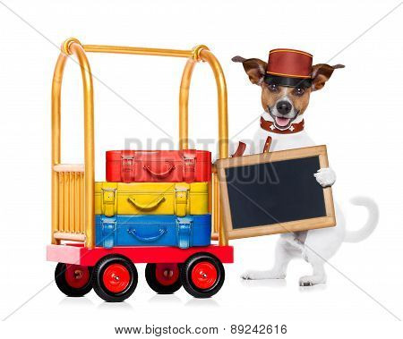 Bellboy Dog