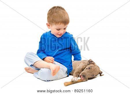 Boy hugging a puppy pit bull, gnawing bone
