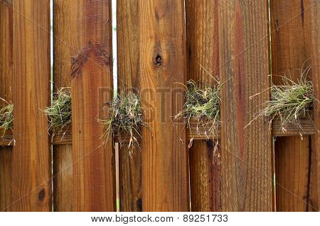 Air Plants Growing On Wooden Fence
