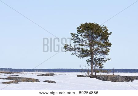 Coast, coastline and shore of the Baltic Sea in March.