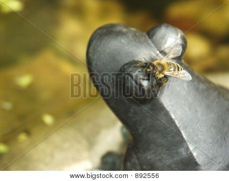 Honeybee On Metal Frog