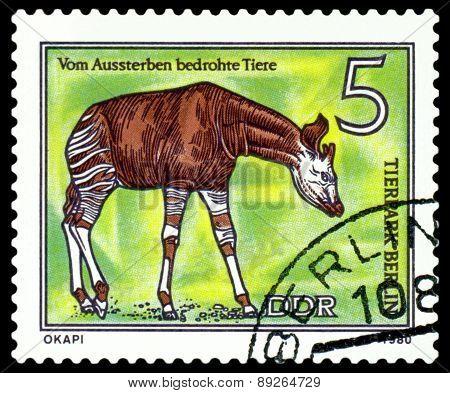 Vintage  Postage Stamp.  Okapi.