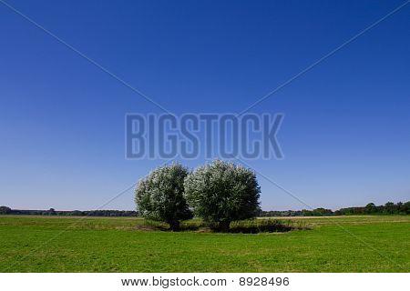 Bäume und ein blauer Himmel
