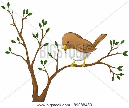 Cute Little Nightingale Bird On The Branch Of The Tree