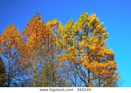 Shades Of Fall Colors 2