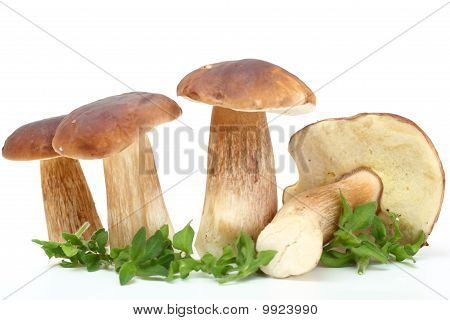Group Of Forest Mushrooms
