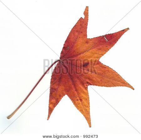 Green Fall Leaf