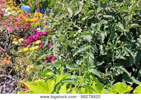 Garden With Young Fresh Vegetables