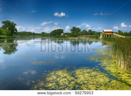 summer scene in Hungary- cows, two stilt houses, trees, clouds, reeds,blue sky and a backwater