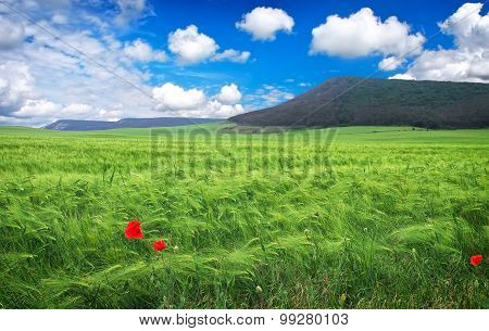 Beautiful landscape with meadow mountain and blue cloudy sky. Nature composition.