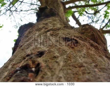 Wooden Tree