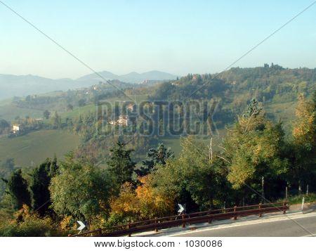 Urbino Woods
