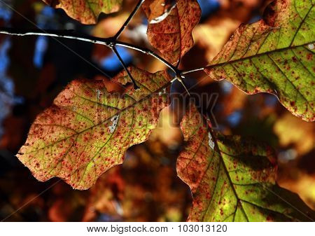 Colorful Leaves of Fall