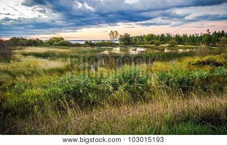 Tahquamenon River Wetlands Habitat