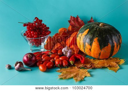 Colored Pumpkin And Viburnum On Aquamarine Shadowless Background