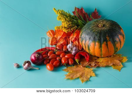Colored Pumpkin And Fall Harvest