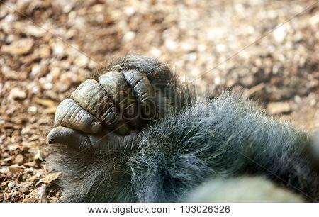Gorilla Hand
