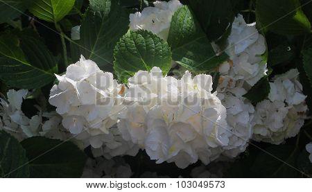 Simple White Flower Display