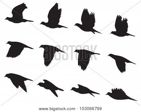 Silhouette Pigeons bird flying motion vector set